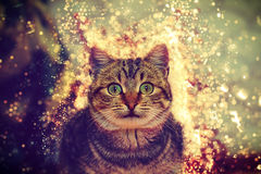 New Year surprise cat Royalty Free Stock Photos