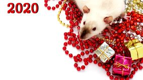 New year 2020. Symbol of the year of the rat. Rat sitting among the Christmas decorations royalty free stock images