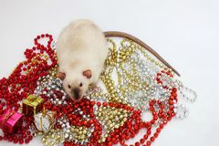 New year 2020. Symbol of the year of the rat. Rat sitting among the Christmas decorations stock image