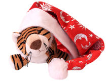 New-year tiger cub. Stock Photography