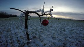 New Year time branch with Christmas decoration on field in winter morning. New Year time branch with Christmas bauble and decoration on field in winter morning stock footage