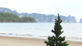 New year tree. On seacoast with the islands on background stock video