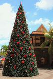 New Year tree in tropics. Port Louis, Mauritius Royalty Free Stock Images