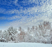New Year tree in winter forest. Beautiful winter landscape with snow covered trees. Trees covered with hoarfrost and snow. Beautif Royalty Free Stock Images