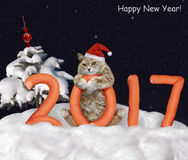 New Year wit a cat. Stock Photos
