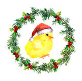 New year wreath - christmas baby chicken in red santa`s hat. Watercolor bird Royalty Free Stock Image