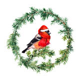 New year wreath - fir and bullfinch bird in red hat. Watercolor. Fir tree, mistletoe and birds isolated. Watercolor hand made desig Stock Image