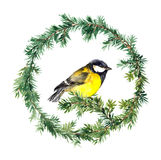 New year wreath - spruce and tit bird. Watercolor Stock Photo