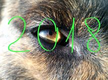New Year 2018. Yellow color; The beast is a dog; Element - earth. The eye of an animal.New Year 2018. Yellow color The beast is a dog Element - earth Stock Photos
