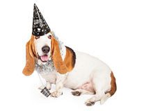 New Years Basset Hound Dog. A fun Basset Hound dog wearing a black New Years Eve hat and party necklace royalty free stock photography