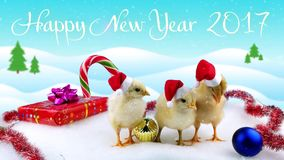 New Years day card 2017 with text, symbol of the Chinese calendar. New Year's day card 2017 with text, symbol of the Chinese calendar, three new born cute