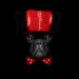 New years eve  dog on black backgroud Stock Photo