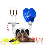 New years eve dog. Dog celebrating with champagne and a blue happy new year hat lying upside down stock image