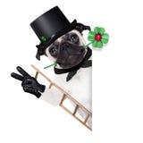 New years eve dog Stock Image