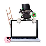 New years eve dog. Pug dog as chimney sweeper with four leaf clover  behind white pc laptop computer screen , celebrating and toasting for new years eve Stock Photos