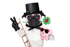 New years eve dog. Pug dog as chimney sweeper with four leaf clover  celebrating and toasting for new years eve isolated on white background Royalty Free Stock Photo