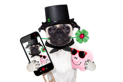 New years eve dog selfie Royalty Free Stock Image