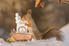 New years eve preperations. Red squirrels standing on ice and snow with a wheelbarrow filled with snowballs stock image
