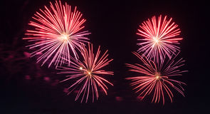 New years Fireworks Royalty Free Stock Image