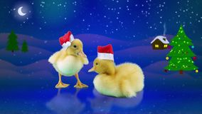 New Years holidays, cute funny little ducklings in Santa hats. Standing on the ice, winter night background with snow, moon, starts and Christmas tree stock video