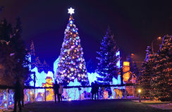 New years spruce in park in the night Stock Image