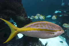 New York Aquarium. Coney Island, Brooklyn, New York, United States of America Stock Images
