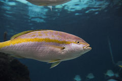 New York Aquarium. Coney Island, Brooklyn, New York, United States of America Stock Image