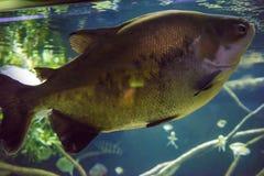 New York Aquarium. Coney Island, Brooklyn, New York, United States of America Royalty Free Stock Photography