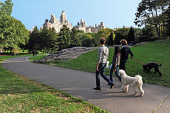New York Central Park Royaltyfri Foto