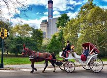 New York , Central Park , USA. Horse , carriage , nature , city Royalty Free Stock Photos