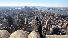New York City metrajes