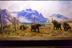 New York City Amerikas förenta stater - Maj 01, 2016: Det amerikanska museet av naturhistoria Royaltyfri Foto