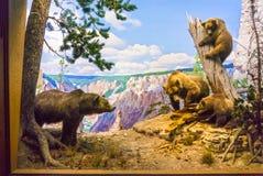 New York City Amerikas förenta stater - Maj 01, 2016: Det amerikanska museet av naturhistoria Arkivfoton