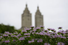 New York City architecture during Spring. Beautiful purple Spring flowers framing New York City architecture stock photos