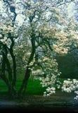New York City botanisk trädgård Royaltyfri Bild