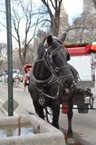 New York City Carriage Horse stock image