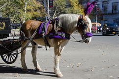 New York City Carriage Horse Stock Photography