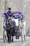 New York City Carriage Horse. A white horse pulls a white carriage through Central Park. The ride is a tradition for tourists and romantic dates in the city Royalty Free Stock Photography