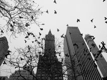 New York city central park black and white Stock Photography