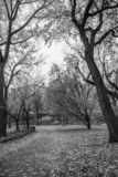 New York City - Central Park i autum - svartvit bild royaltyfria bilder