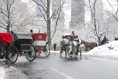 New York City Central Park i vinter Royaltyfri Foto