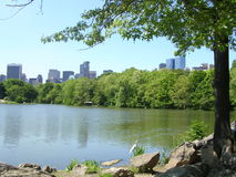 New York City From Central Park Turtle Lake. Astork stands at the edge of Turtle Lake, Central Park, with the buildings of New York City appearing over the stock image