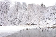 New York City Central Park in winter Stock Photography