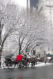 New York City Central Park in winter Royalty Free Stock Photo