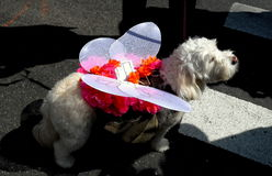 New York City: Dog in Costume at Easter Parade Royalty Free Stock Photos