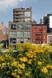 New York City: Highline urban park yellow flowers Royalty Free Stock Photos