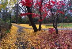 New York City horisont och Central Park i höst royaltyfri bild