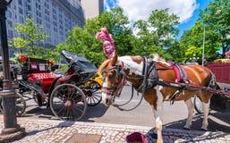 NEW YORK CITY - JUNI 2013: Hästvagn längs 59. staden a Arkivfoton