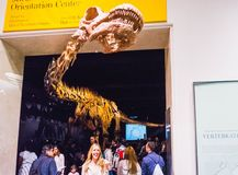 New York City, los Estados Unidos de América - 1 de mayo de 2016: Modelo de Dinossaur Fossile en el museo americano de natural Fotos de archivo libres de regalías