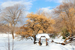 New York City Manhattan Central Park panorama Royalty Free Stock Photos